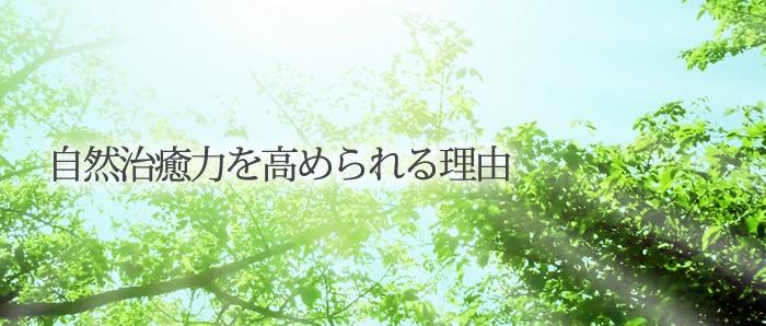 subtittle_banner2